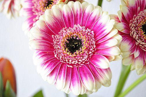 beautiful flowers pink & white