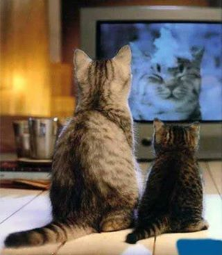 How cute.. :) Cat