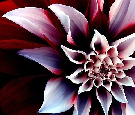 ^Art flower