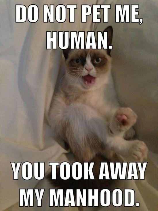 grumpy cat, do not pet me