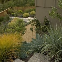 Landscape Mid Century Modern Garden Design, Pictures, Remodel, Decor and Ideas - page 2