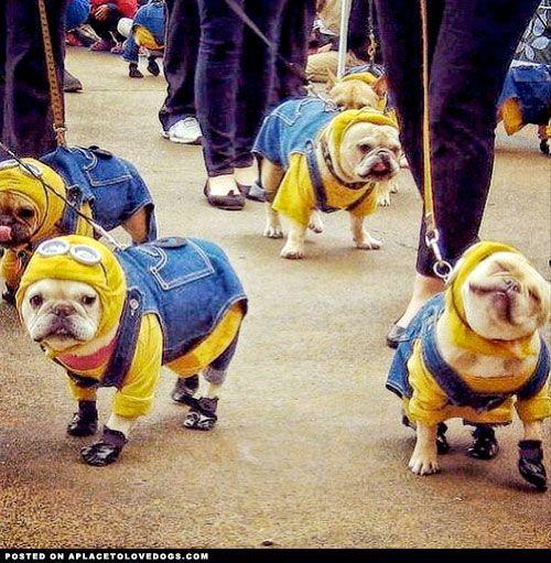 Bulldog Minions!