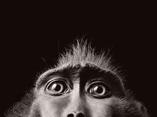 More than Human: Animal Portraits by Tim Flach