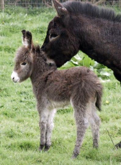 Donkey baby #animals #
