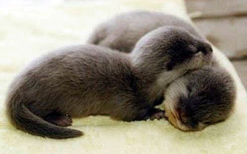 Otters. A cup of cute.