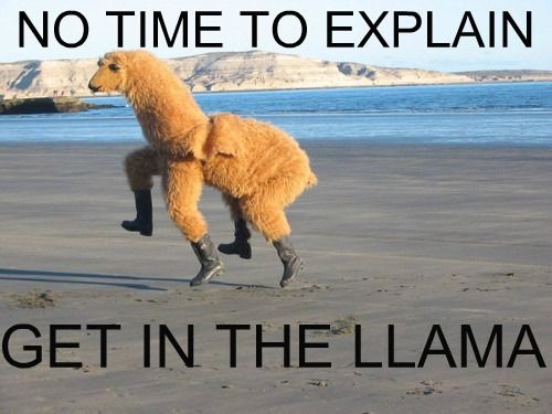 always a good moment for a llama on a beach.