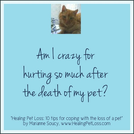 """""""Healing Pet Loss - 10 tips for coping with the loss of a pet"""" - see more: healingpetloss.co..."""