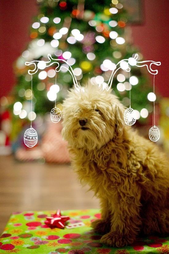 holiday christmas dog