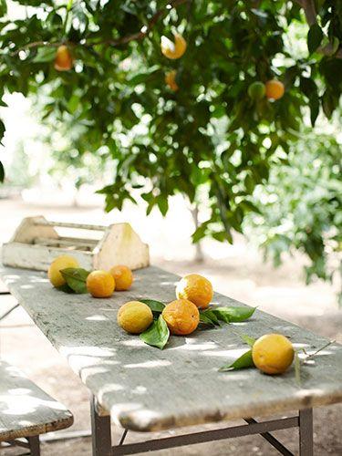 Love lemon trees ?