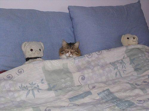 Cougie as stuffed animal