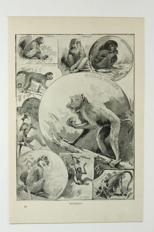 monkeys vintage animals #vintage #animals #monkeys