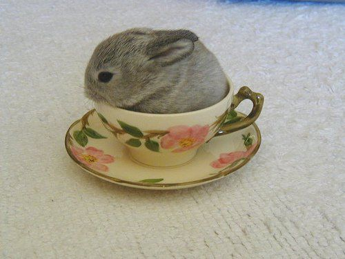 Teacup Bunny ? via lavender-ice tumblr - #teacup #tiny #rabbit #rabbits #bunny #bunnies #pet #pets #animal #animals #cute - tå?