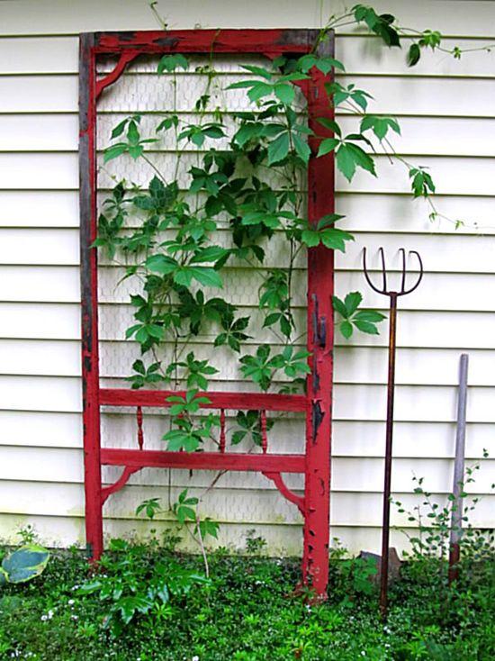 Using an old screen door as trellis-