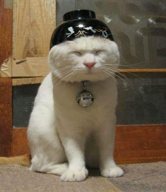 funny cat #funny pacquiao photos