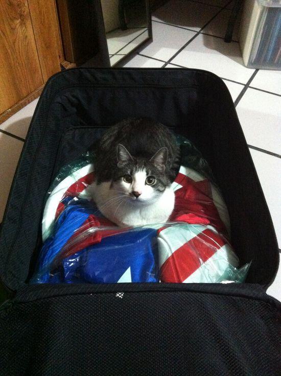 My cute #cat