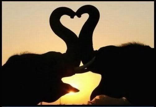 Kissing Elephants :)