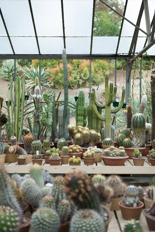 magical greenhouses