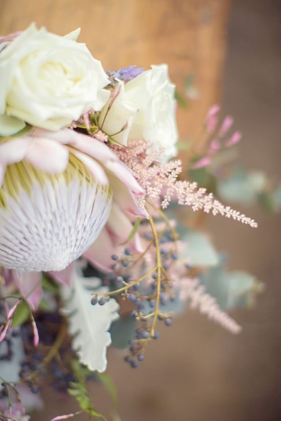dazzling protea  Photography By / lifeinstillphotog...