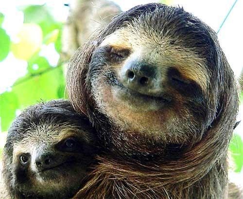Baby sloth . Mom sloth   . Smiles.