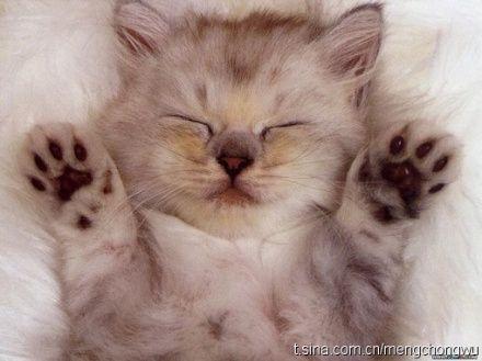 Funny sleeping animals (32 photos)