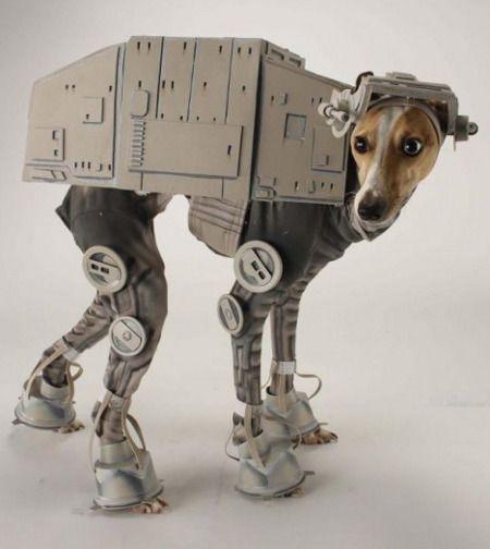 Awesome dog costume.