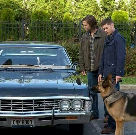 SupernaturaL ~Dog Dean Afternoon {{ One of the best episodes ever.. }}<<<<<-and you knew it was gonna be funny cuz the intro was all clips from the funny episodes!