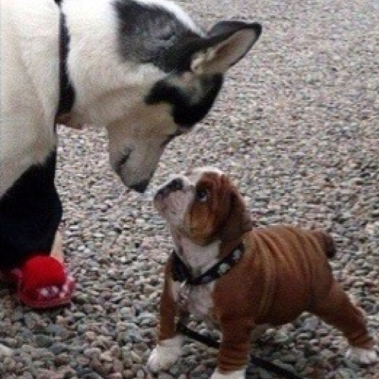 I... I'm not scared of you!.. omgoodness! i want that little baby!!