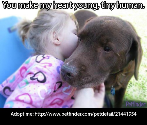 Old pets still have a lot of love to give! Repin Apollo if you agree!