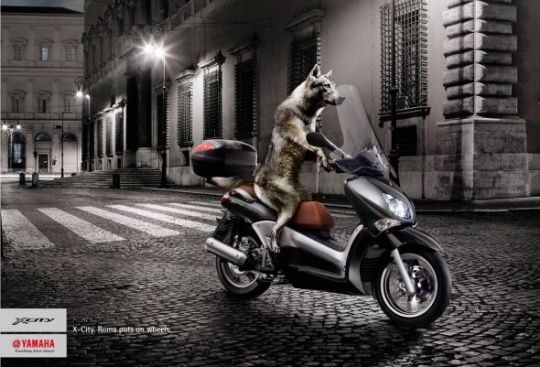 Yamaha X-City: Wolf by 1861 United   Animals in Print Ads
