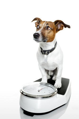 The Dog Trainer : Physical Exercise and Teaching Good Manners :: Quick and Dirty Tips ™