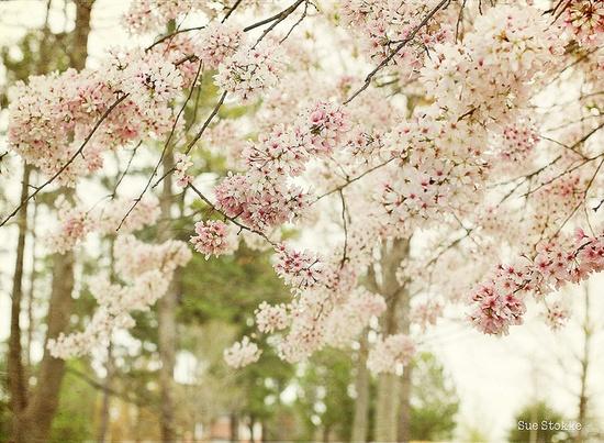 Flowers & Flowers