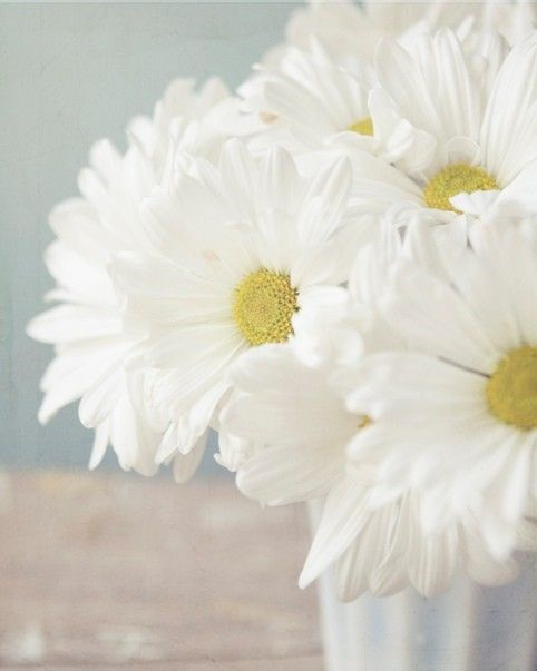 favorite white flowers