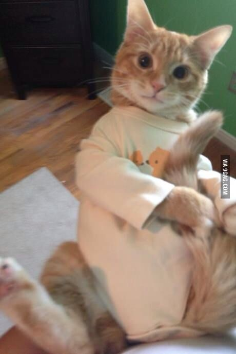 Cat in baby clothes