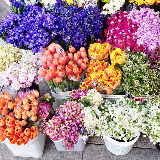Gorgeous blooms