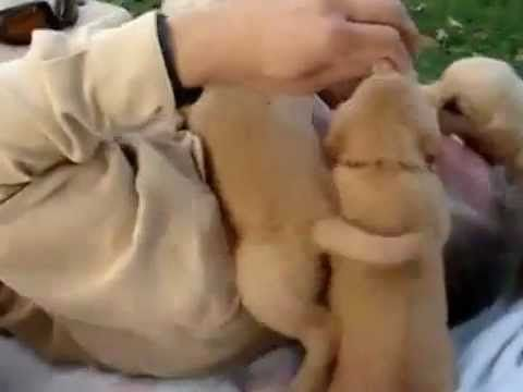 Funny Video - Attacked By Army of Puppy