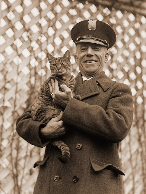 Tiger the White House cat and pet of Mrs. Coolidge 1924 by janwillemsen, via Flickr