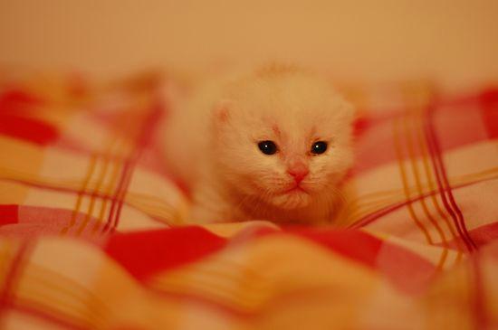 Cute cat photographs