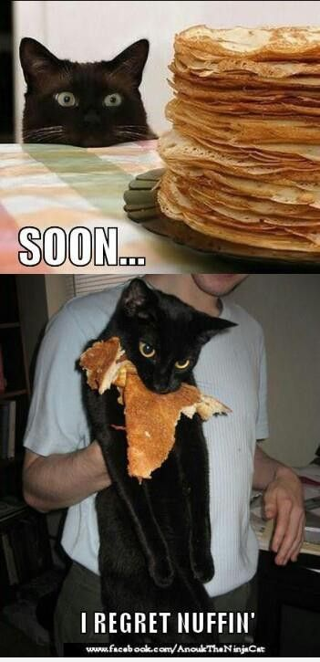 I regret nothing.  #cat #quotes #cats #funny #meme =^..^= www.zazzle.com/...