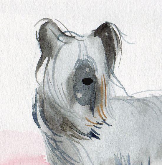 Skye Terrier portrait.