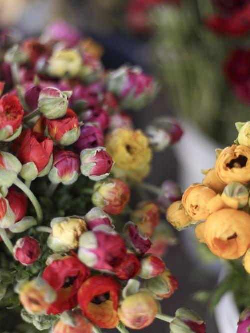 ranunculus  #flowers