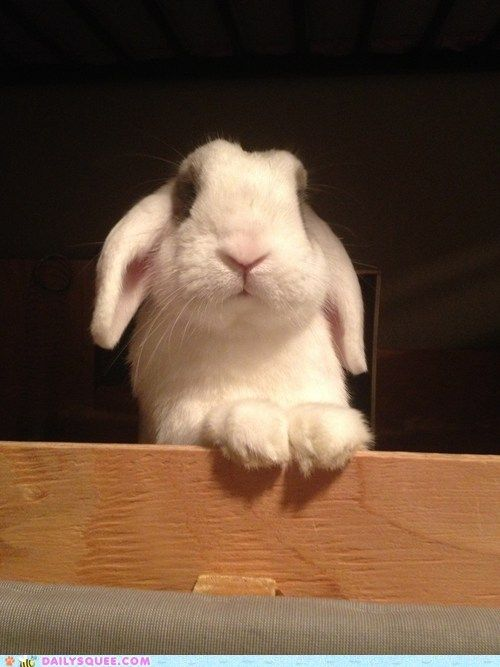 Good morning! It's time to get out of bed and give me a carrot. #animals #cute #rabbit #bunny