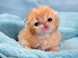 #Cute little kitten. Is he blowing kisses? Omg. Too. Cute!