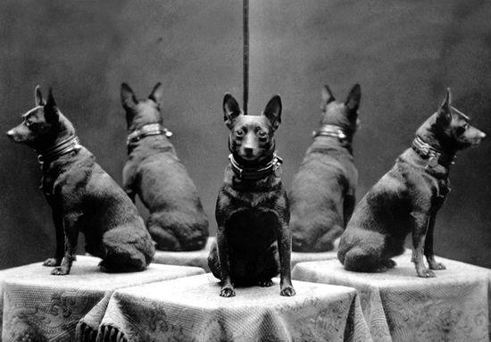 Vintage dog photo.
