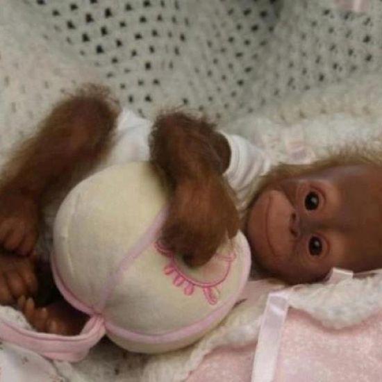 Holy crap baby monkey