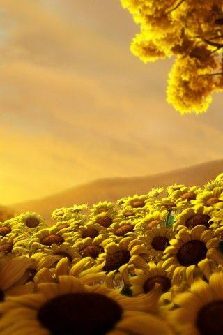 Sunflowers World