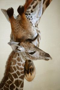 Baby Animal at Disney- Masai Giraffe #DisneyWorld #AnimalKingdom #MasaiGiraffe