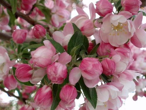 #flowers #gardens