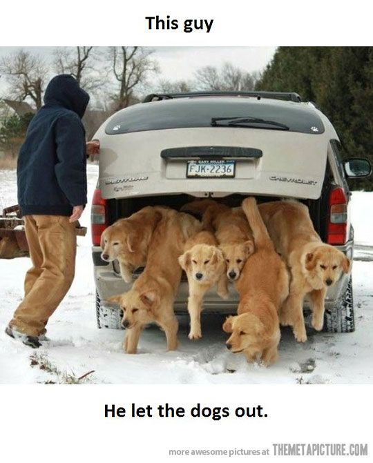 ...he let the dogs out. Lol.