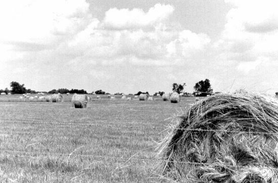 lots of fields