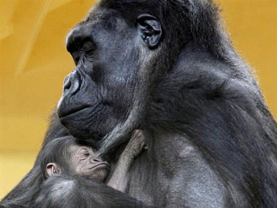 Check out these 18 adorable animal photos (Esteban Cobo / EPA)